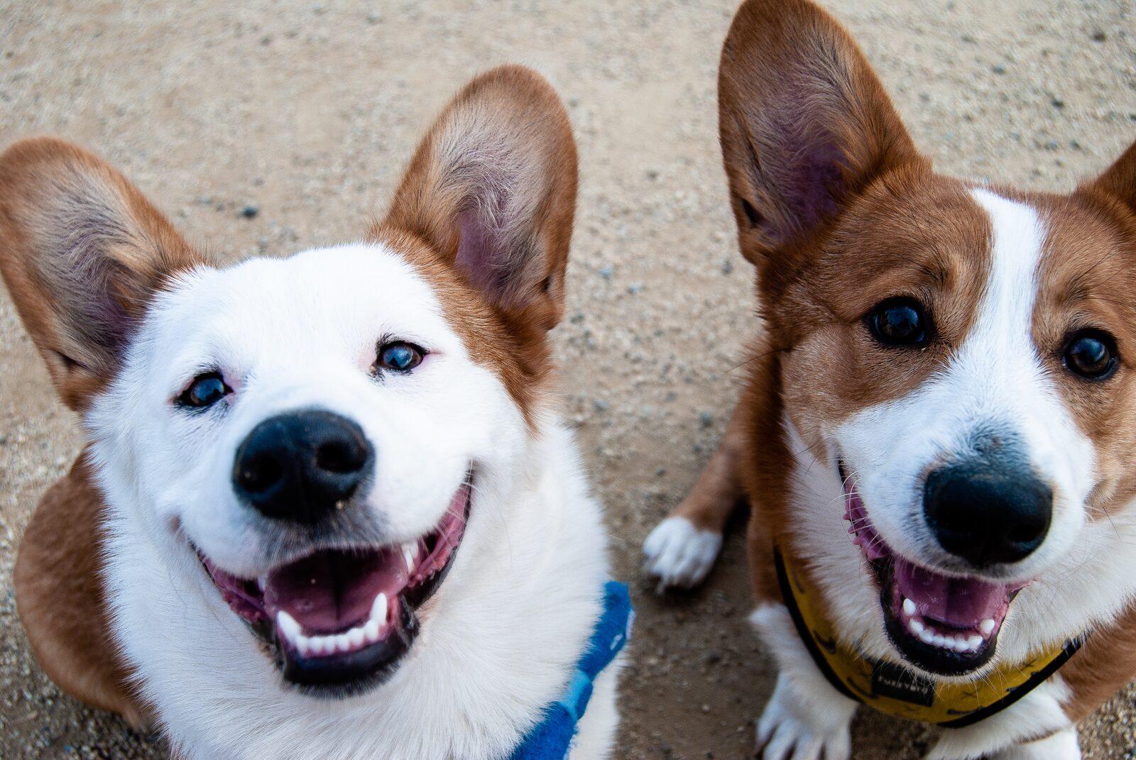 como curar perro con gusanos