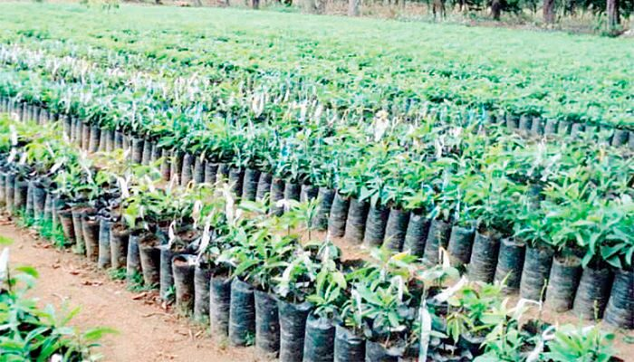 Avocado tree: cultivation, reproduction and basic care